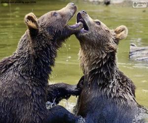 Zwei Bären im Wasser puzzle