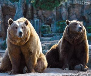 Zwei Braunbären puzzle