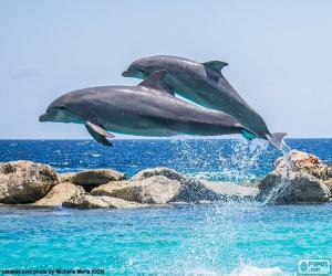 Zwei desphins springen puzzle
