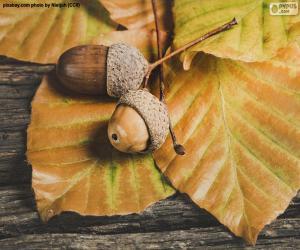 Zwei Eicheln und Herbstblätter puzzle