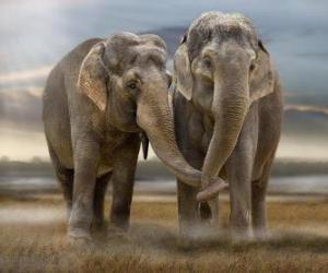 Zwei große Elefanten mit Baumstämmen verflochten puzzle
