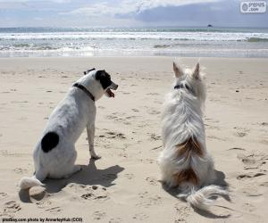 Zwei Hunde am Strand puzzle