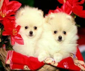 zwei Hunde neben einem Weihnachts-Pflanzen puzzle