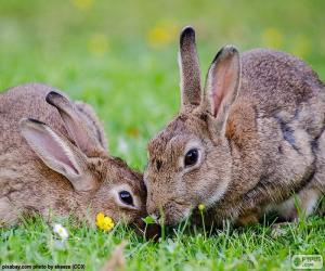 Zwei Kaninchen Essen puzzle