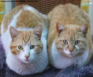 Zwei Katzen puzzle