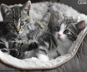 Zwei niedliche Kätzchen puzzle