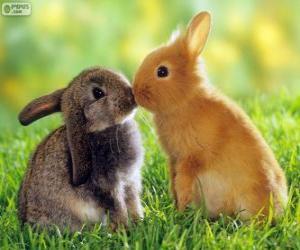 Zwei schöne Kaninchen von Angesicht zu Angesicht puzzle