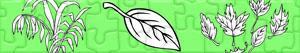 puzzles Pflanzen und Blätter